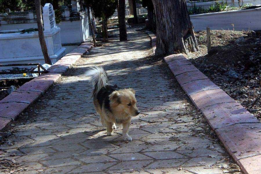 Heartbroken Dog Visits Best Friend Grave Every Day