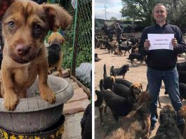 Pesic Man Cares More 750 Dogs Shelter