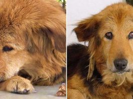 They Abandon Their Older Dog Cutie