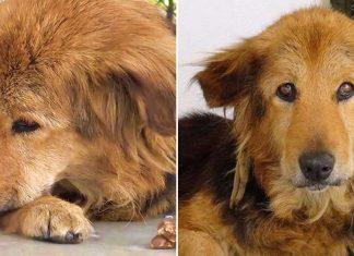 They Abandon Their Older Dog Cutie