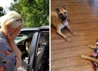 Woman Shelter Dogs Longest
