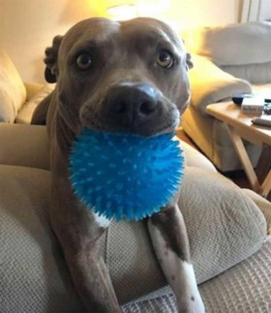 Pat Blue beautiful reaction dog meet dad After 6 Months