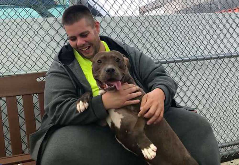 truck driver rescues pit bull dog hickory