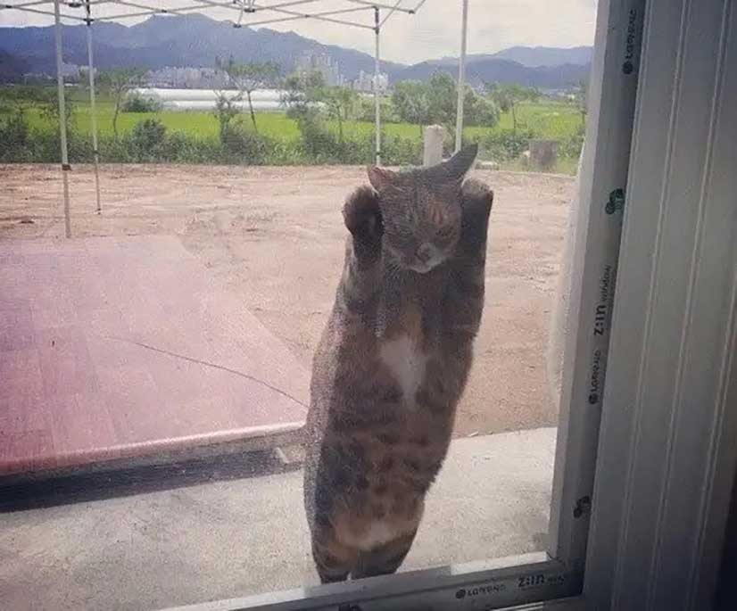 Pets That Want to Come Home Right Now