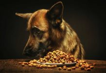 eternally hungry dog breeds