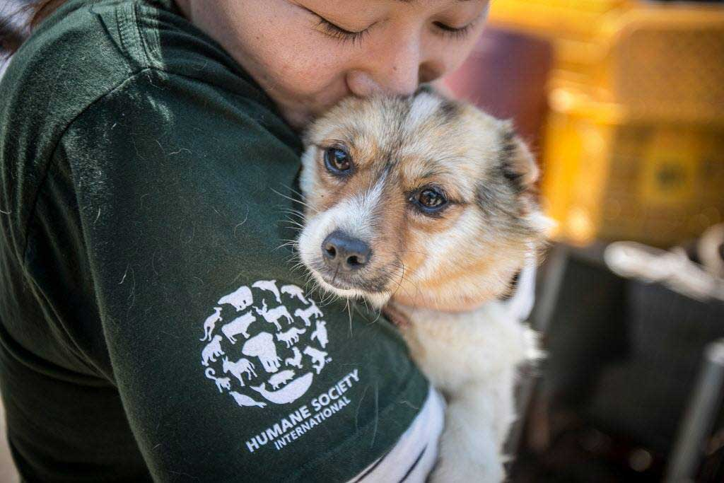china prohibits eating dog meat