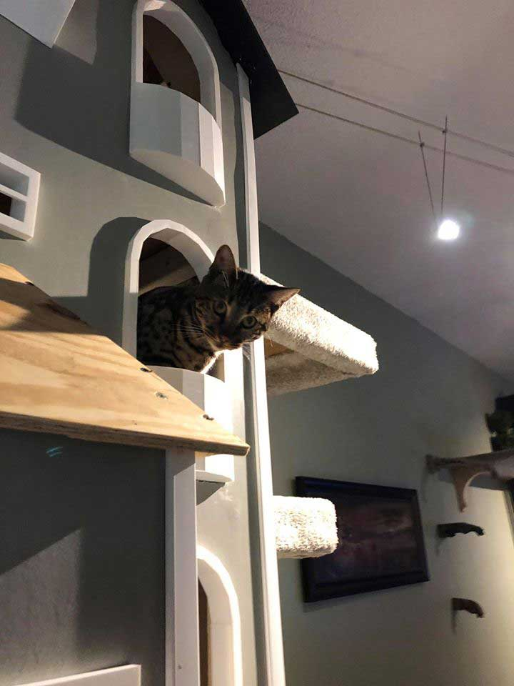Man building custom towers for cats