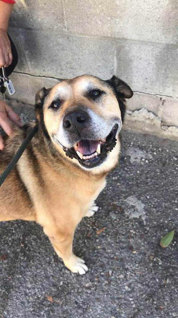 shelter worker enrages abandonment dog Canela