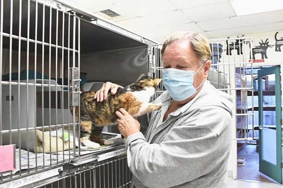 cat reunites family disappear 3 years
