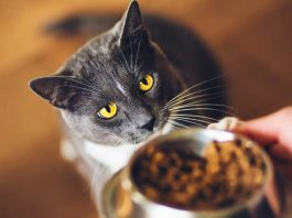 TOP 10 Best Food For Cats