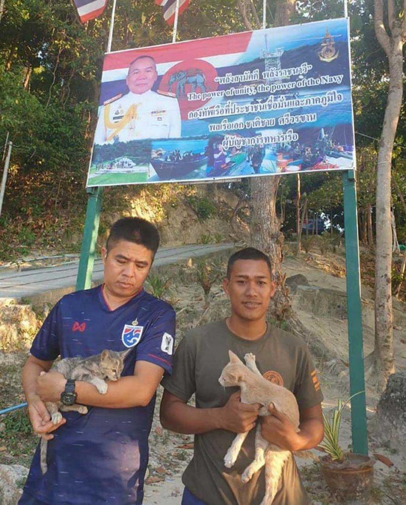Thailand save 4 cats sinking ship