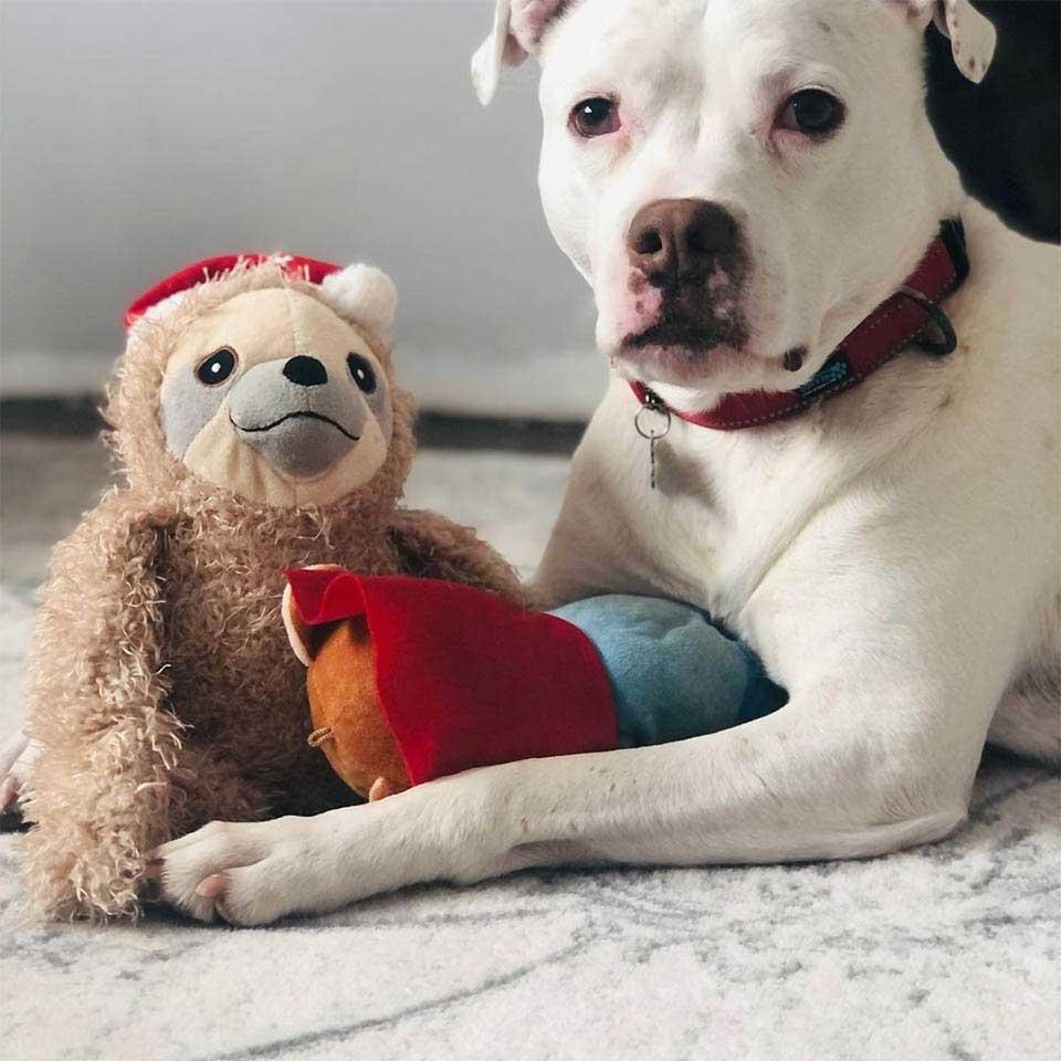 underweight pitbull found abandoned apartment