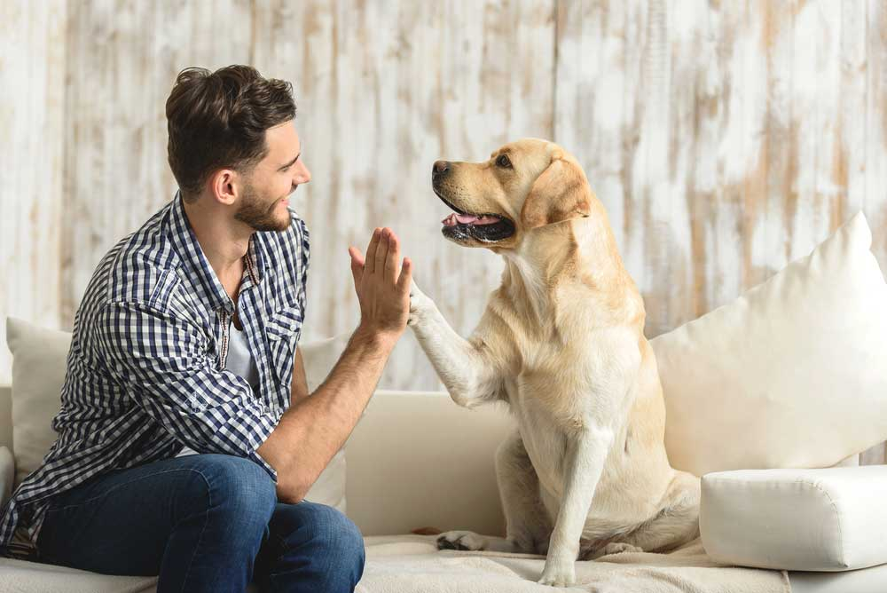 Facts Dog Psychology
