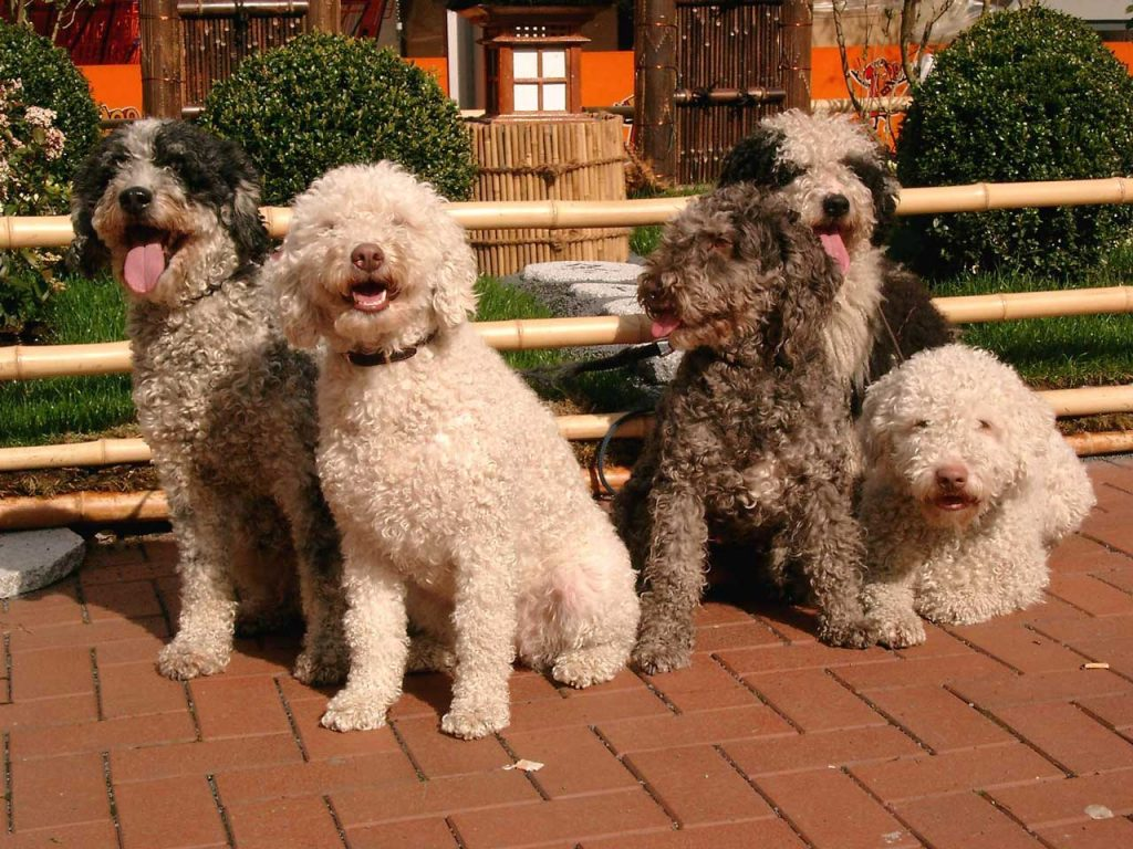 Water dog breeds