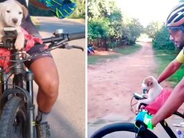 cyclist puppy side road changes life