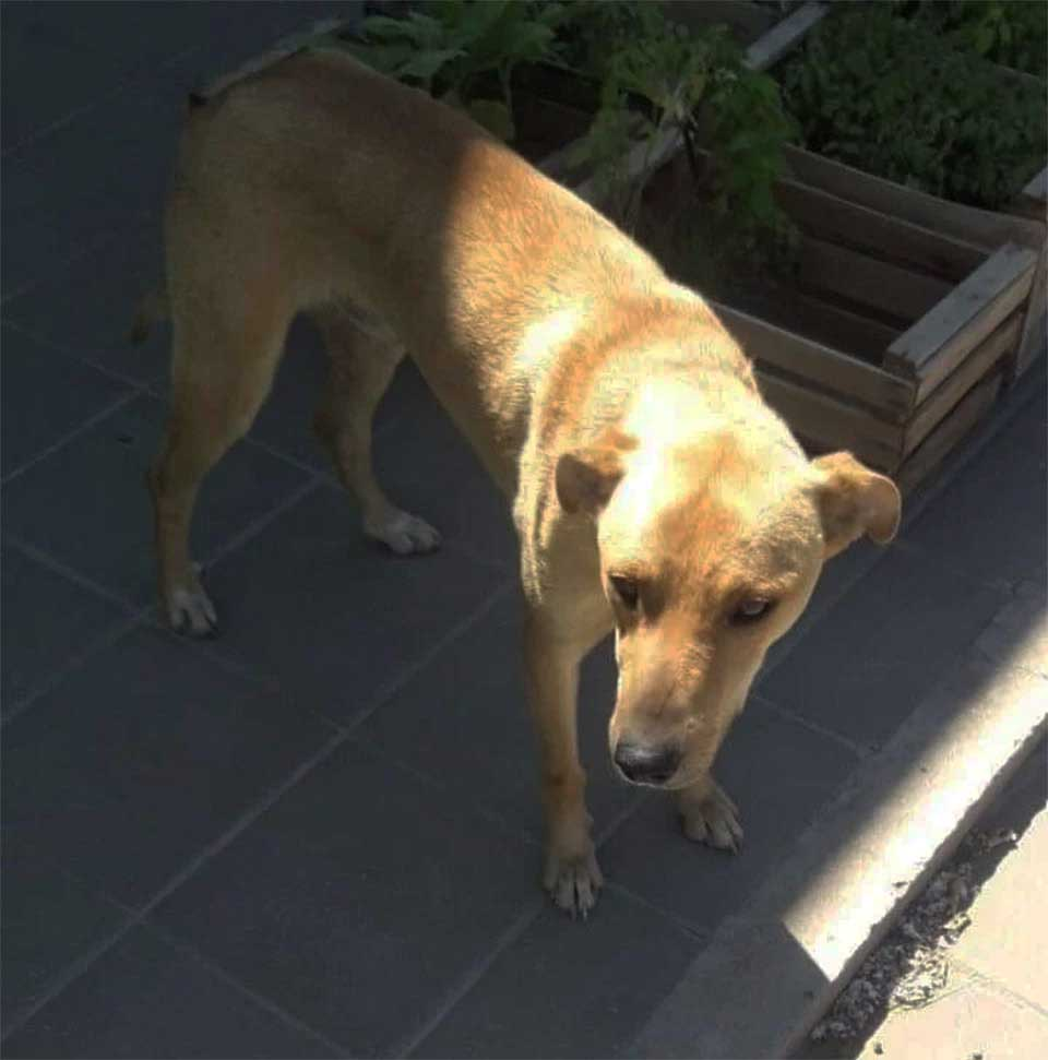 emotional reunion woman lost dog 3 months sol congo