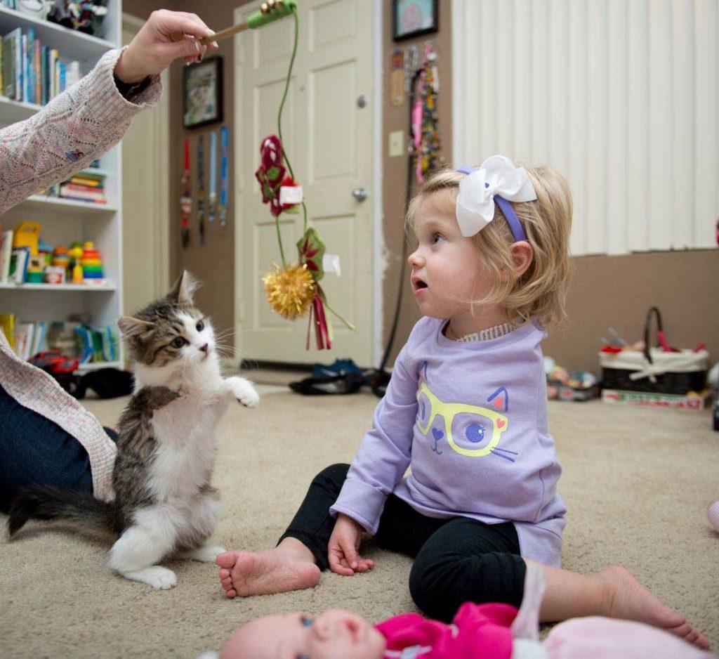 girl lost arm adopts kitten missing limb
