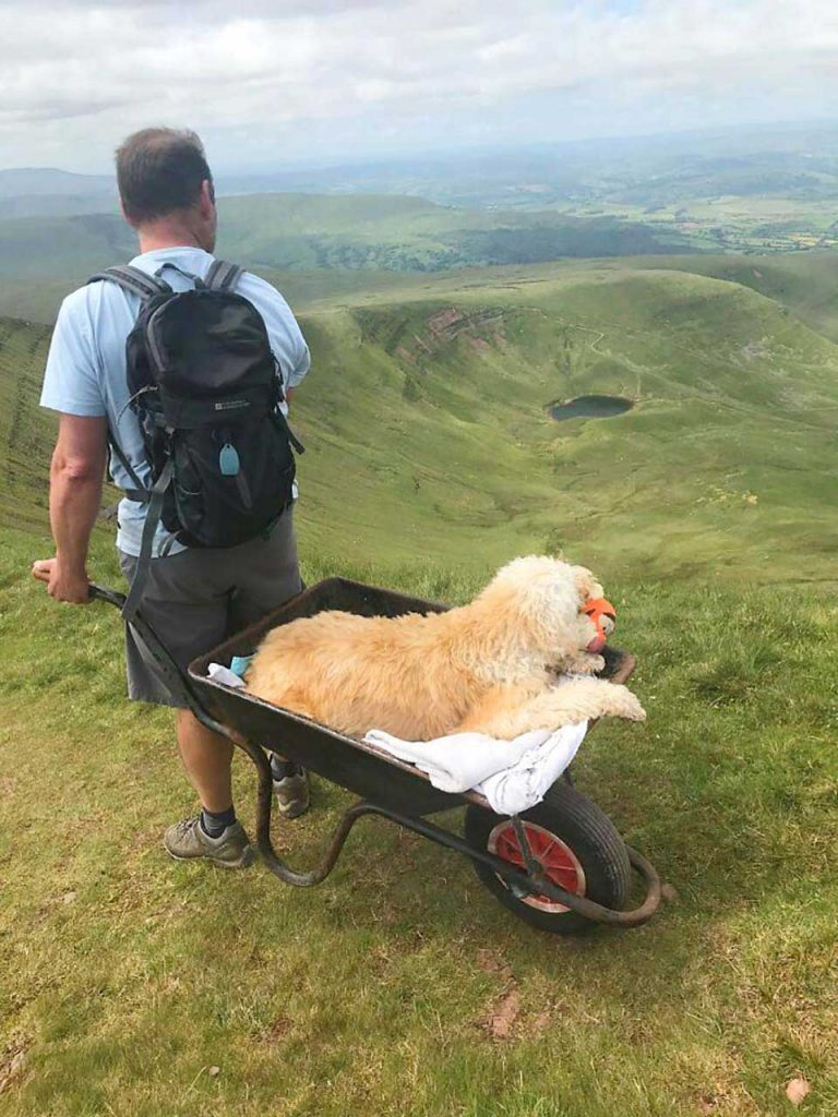 Dying Dog Last Adventure Wheelbarrow