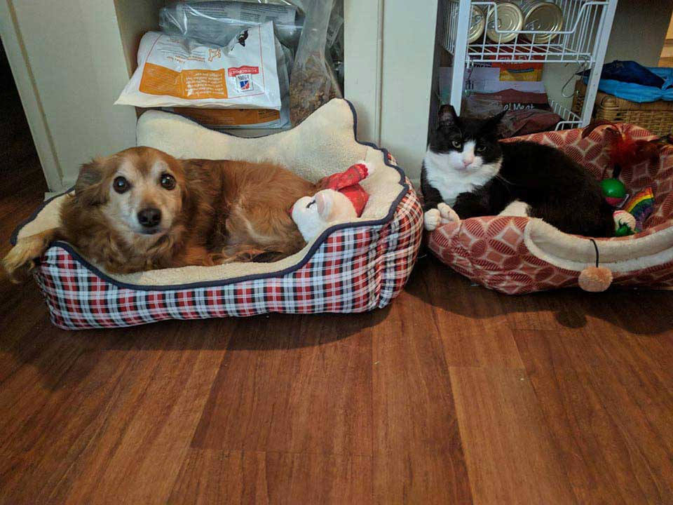 cat friend dog family adopted