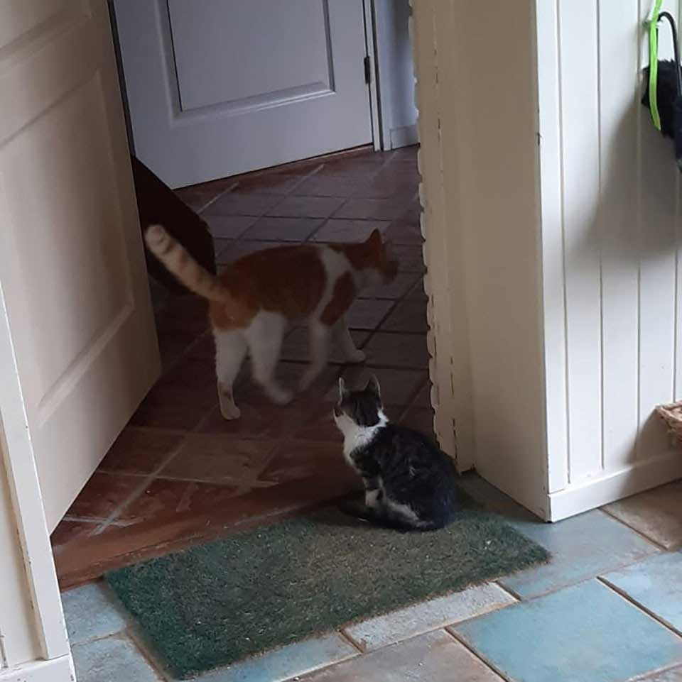 cat makes friend kitten found garden takes home