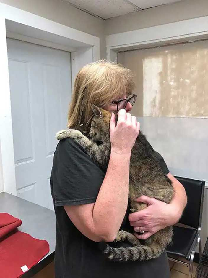 cat reunited with owner missing 11 years