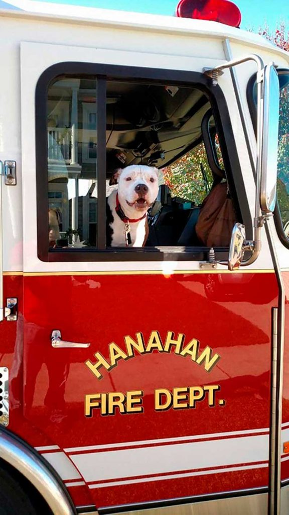 firefighter saved pit bull fire