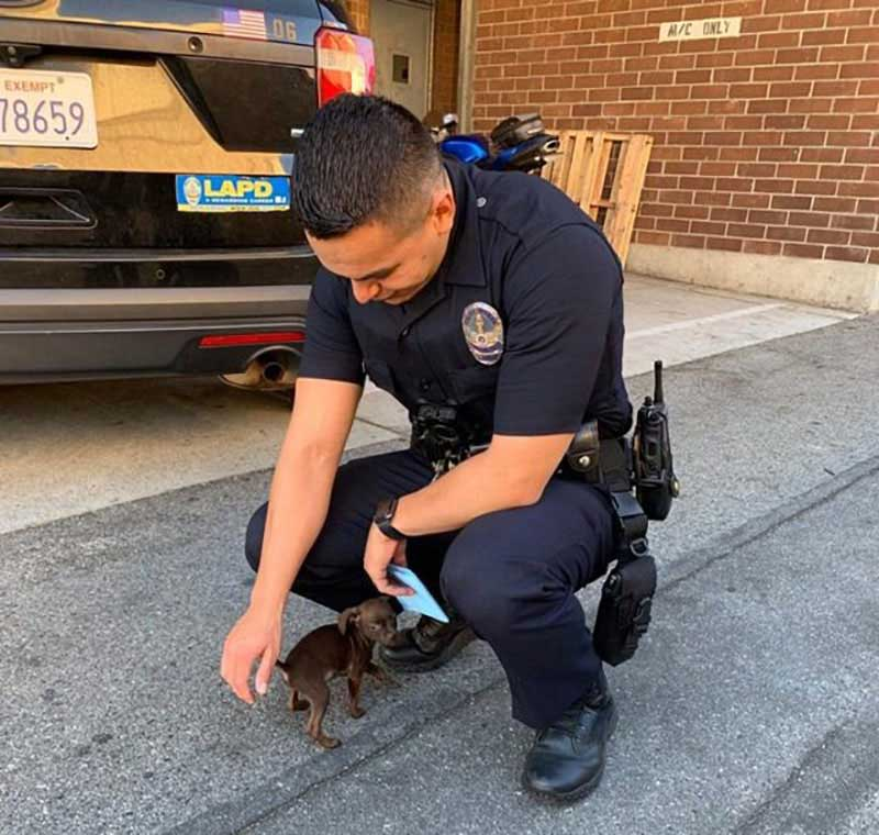 A beautiful puppy that roamed the streets of Los Angeles, chases two policemen who were patrolling the area, looking for help