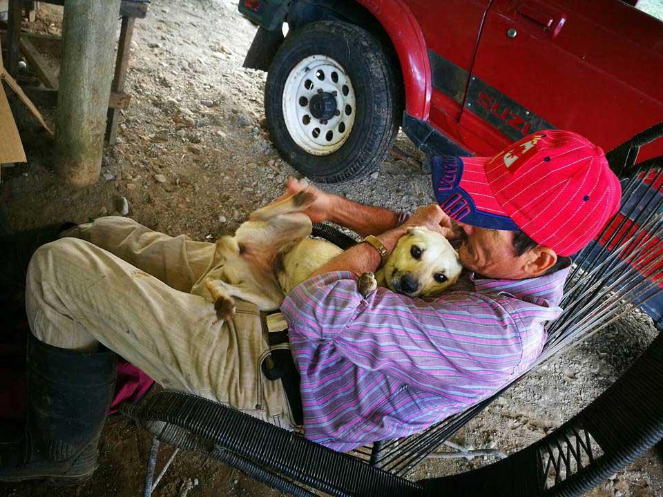 loyal dog seeks help injured father