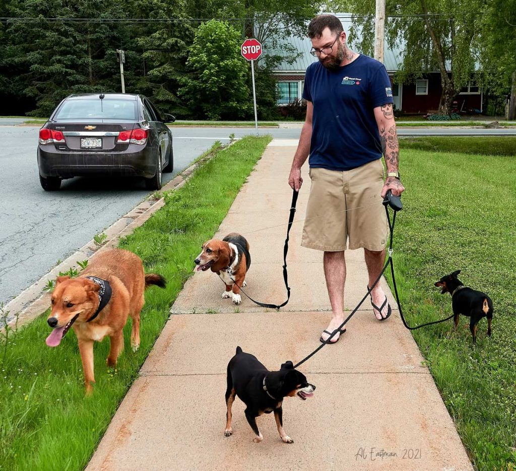 This kind-hearted man found 2 dogs in an accident and cared for them until his parents recovered.