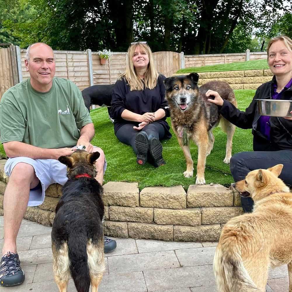 rescue center seeks volunteers hug dogs