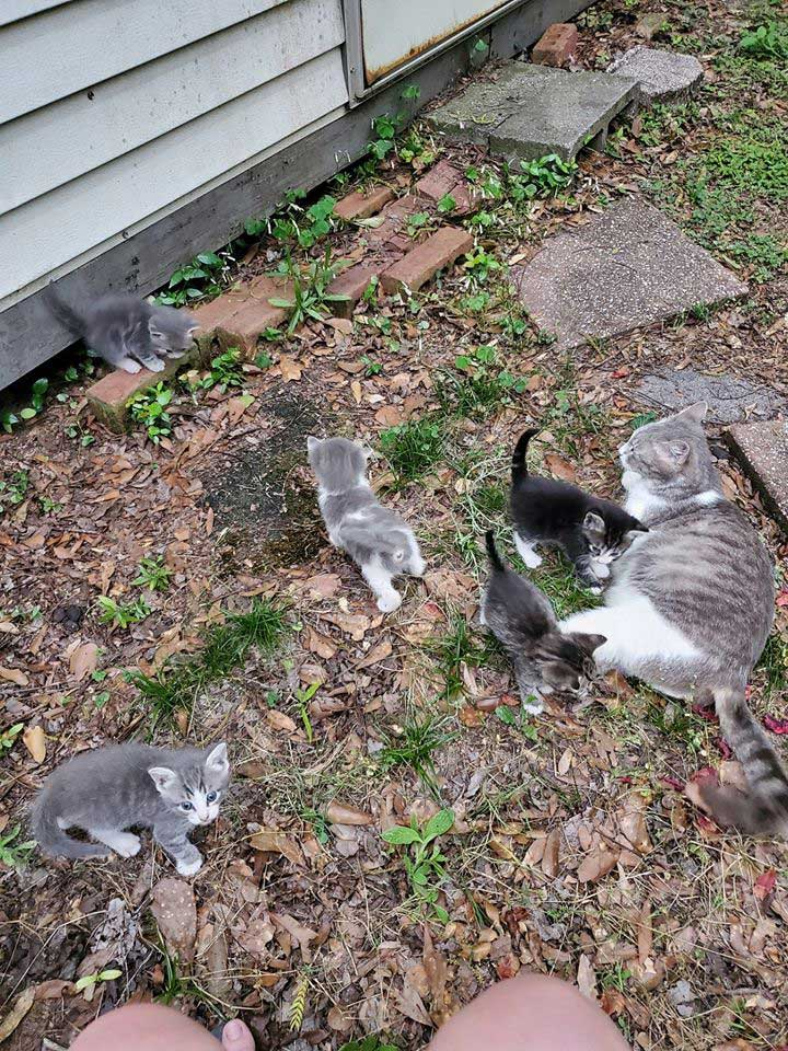 stray cat presents babies woman feeds