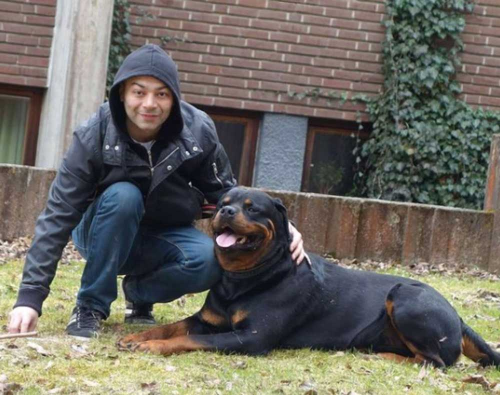 sweet rottweiler consoles strange lost dog