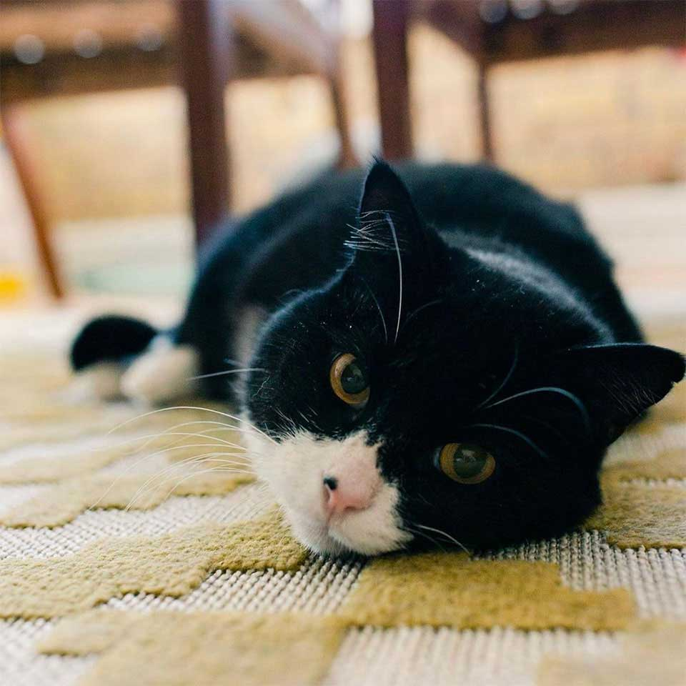two legged cat inspires people adopt special animals