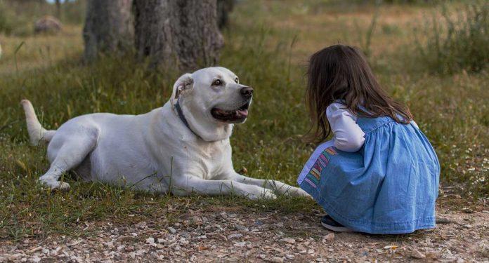 Nature Of Dog Peculiarities Behavior