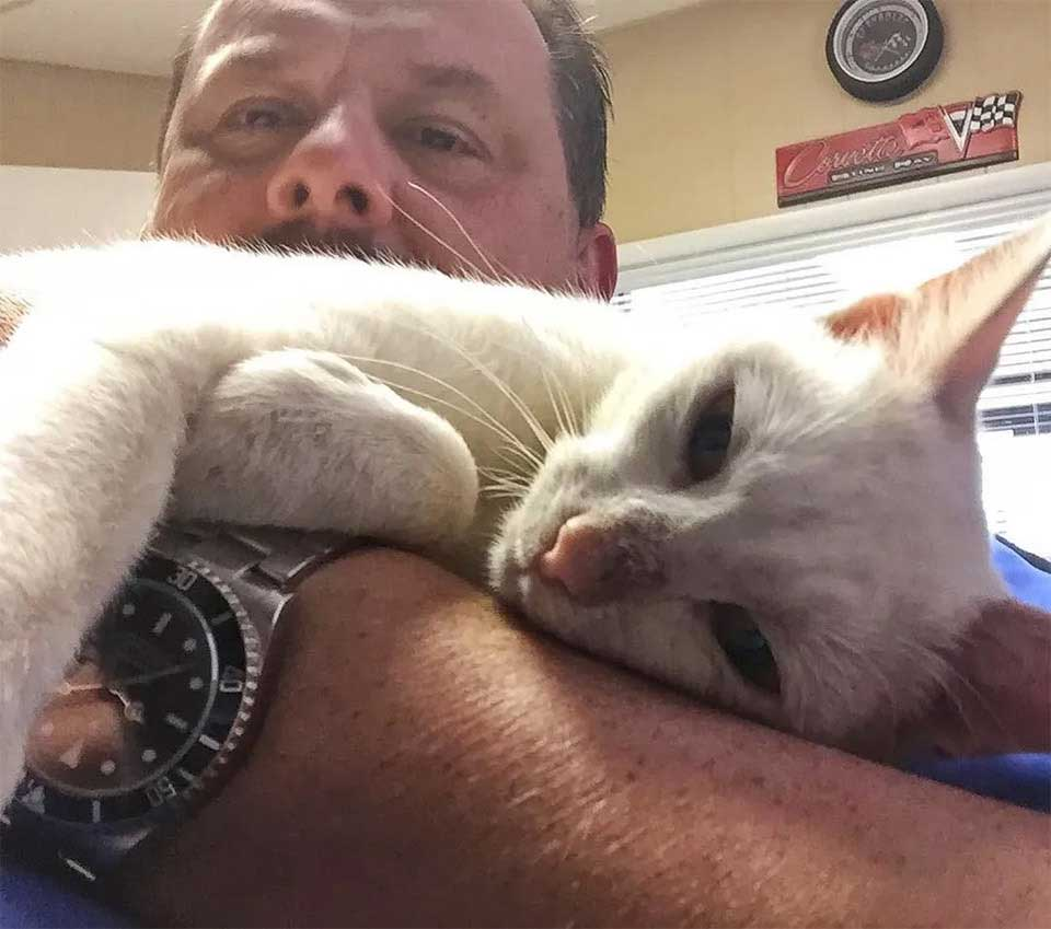 cat carries kittens man helped gave food