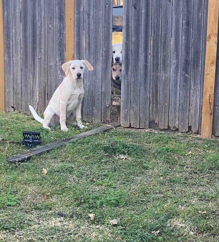 puppy caught orchestrating escape