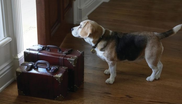 Tips Prevent Separation Anxiety Dogs