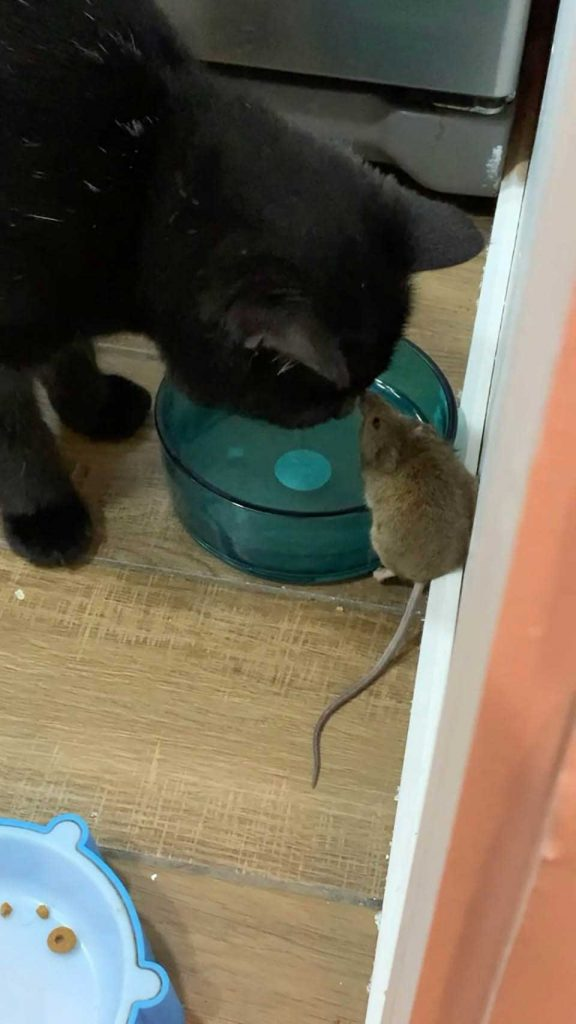 Guy finds cat making friendship mouse