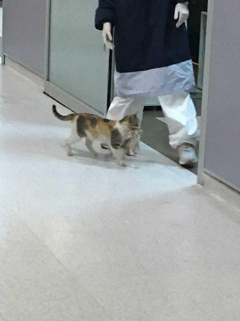 cat takes kitten hospital