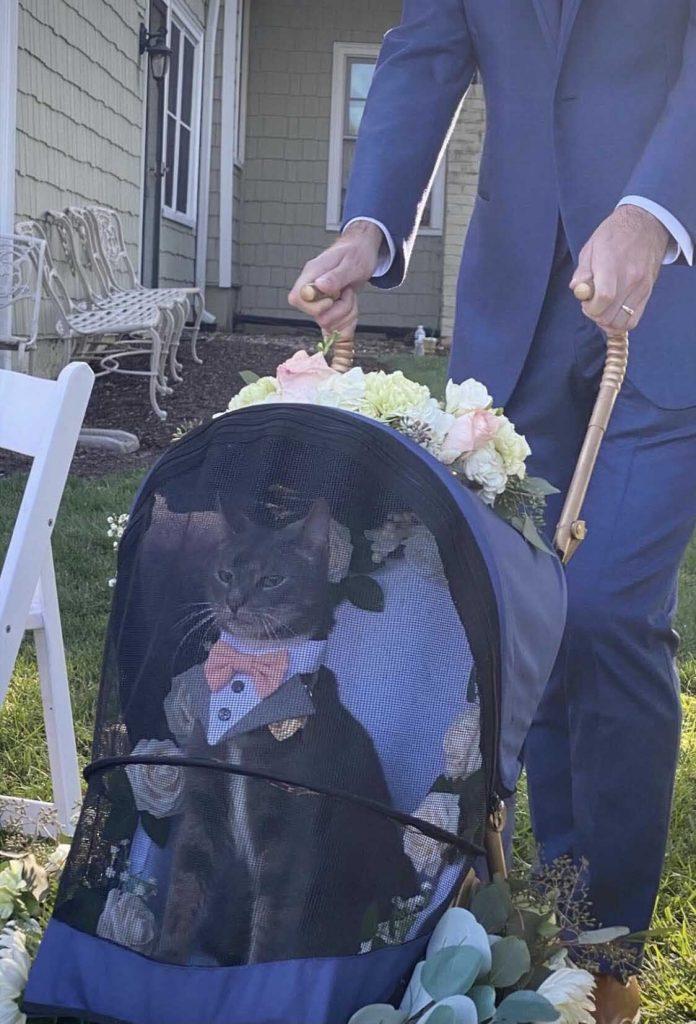 elegant cat rings bearer wedding parents