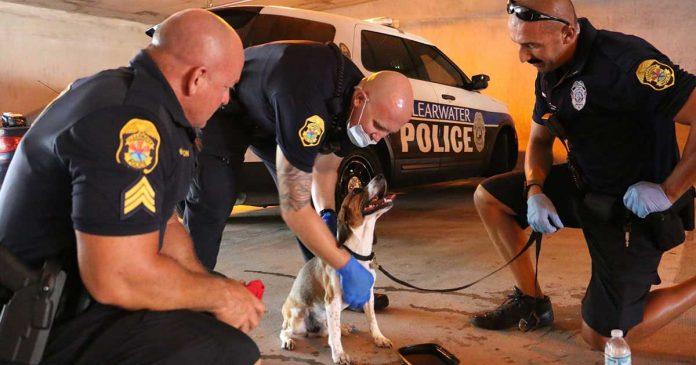 officers smash car window dog barked help