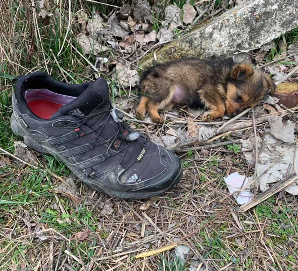 puppy shelter shoes man saves house