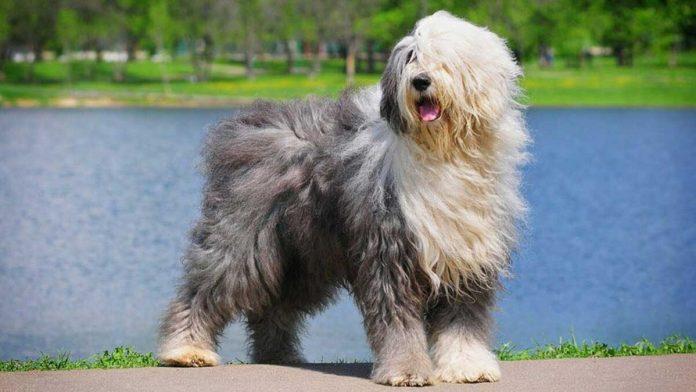 tips minimize hair loss dog