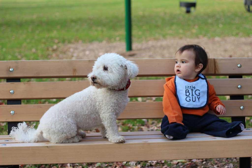 Best dogs kids Bichon Frise