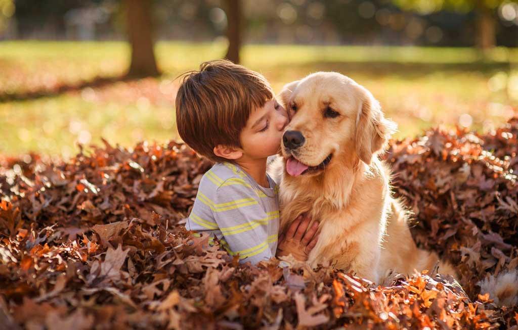 Best dogs kids Golden retriever