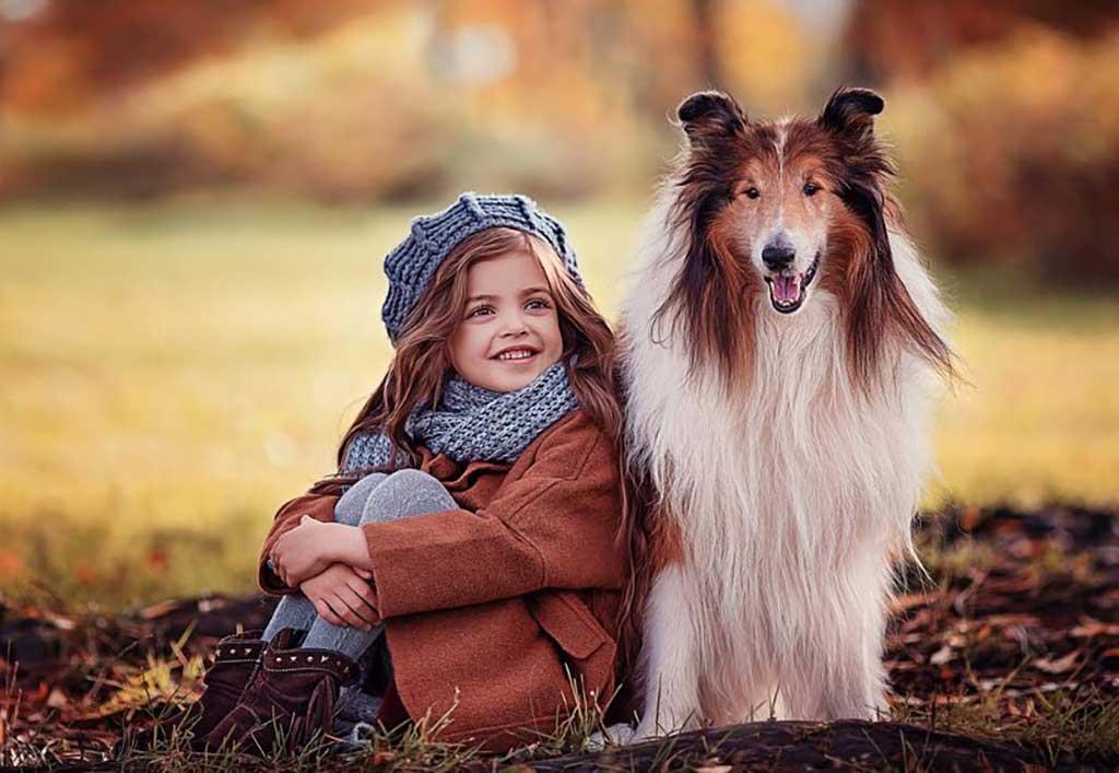 Best dogs kids Sheltie