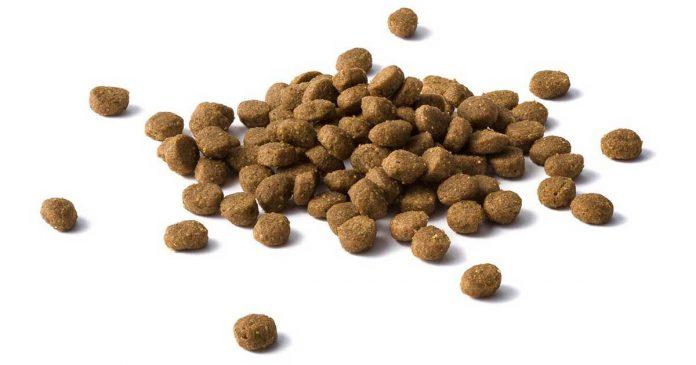 Feed Cat Dry Food