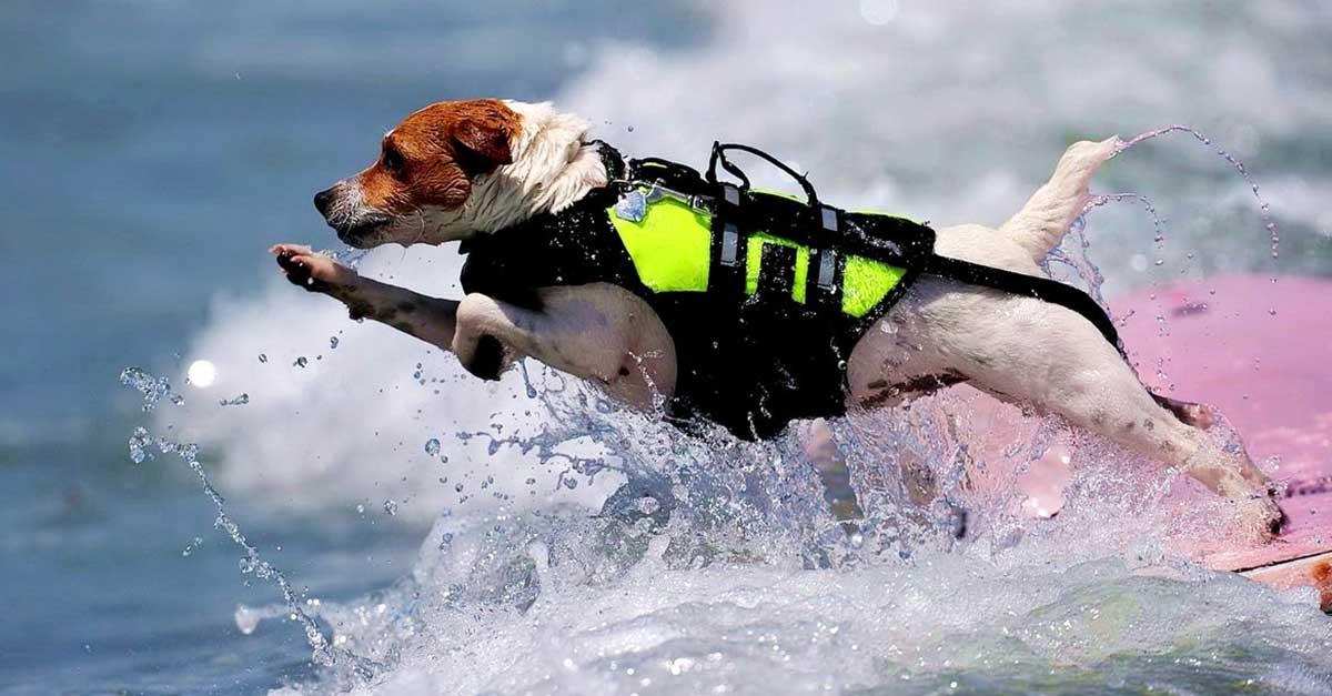 Rescue Dog Breeds