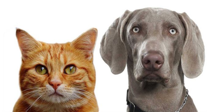 Who is Smarter Cats Or Dogs