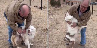 blind deaf dog recognizes grandfather